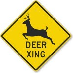 Caution: Deer Crossing